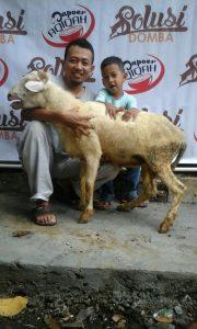 Harga Domba Aqiqah Bandung 2016