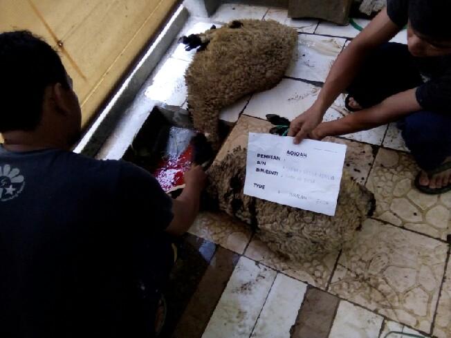 Domba Aqiqah Padalarang