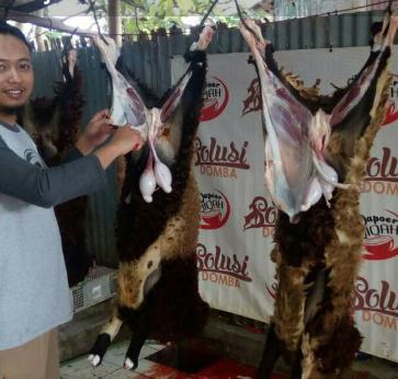Kambing untuk Aqiqah di Bandung