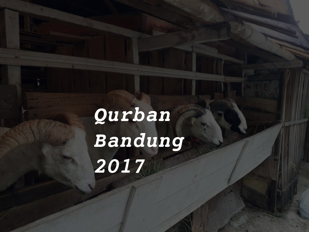 jual domba qurban bandung 2017